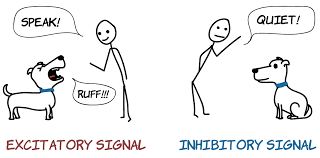 excitatory and inhibitory cartoon